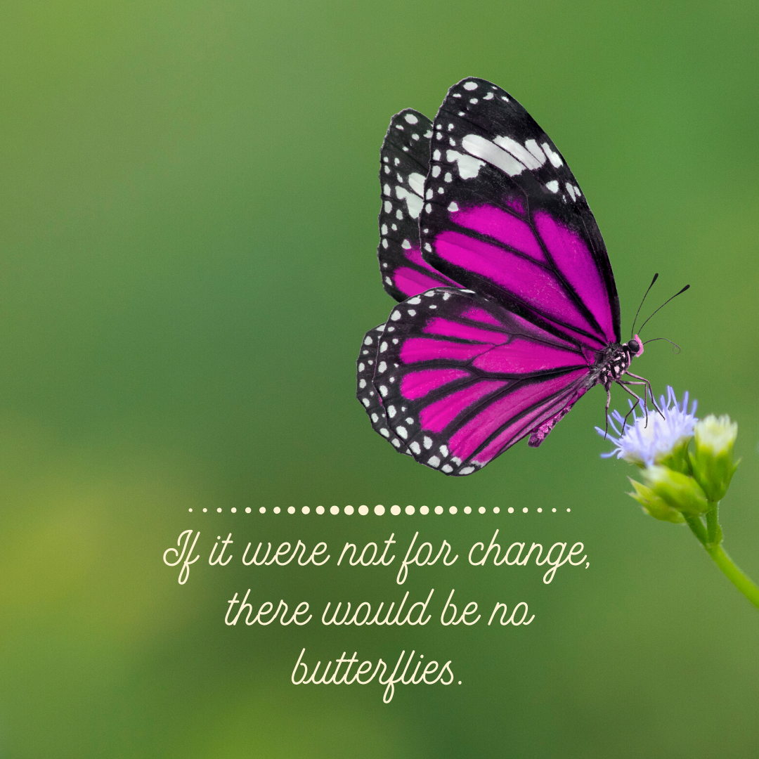 butterflies change